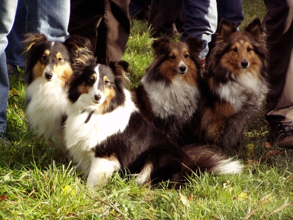 Islay und Tiffy mit ihren Freundinnen Momo und Enya aus Kiel