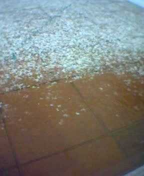 Erster Schnee 5