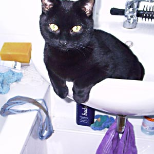 Eine schwarze Katze sitzt in einem Waschbecken. Auf dem Rand der benachbarten Badewanne ligt ein offensichtlich gebrauchter Damen-Slip.