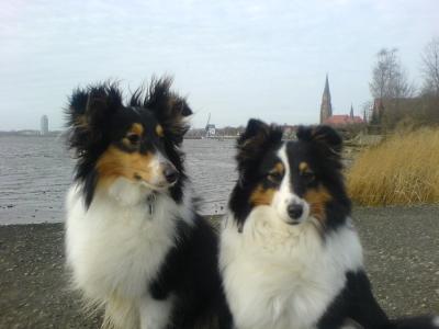 Stürmische Grüße aus Schleswig